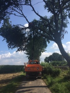 Baum Hartum III